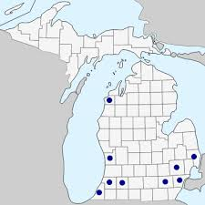 Consolida ajacis - Michigan Flora