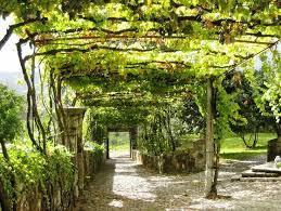 Grape Arbors 25 Unique Grape Arbor Ideas On Pinterest Pergola Garden Garden