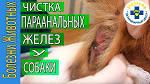 Массаж - Секс массаж - Порно Видео