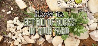 how to get rid of rocks in your yard