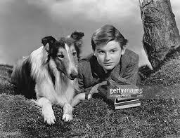 Todo sobre Lassie