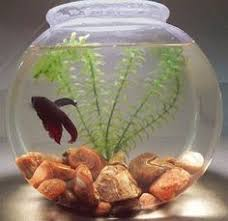 Small Fish Bowl Decorations fish bowl decorations Google Search Reference for fish bowl 15