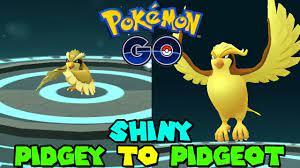 Evolving SHINY PIDGEY TO SHINY PIDGEOT IN POKEMON GO - YouTube