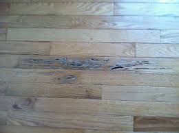 diffe types of termites make themselves known in diffe ways subterranean termites which dwell underground in damp soil can cause damage that