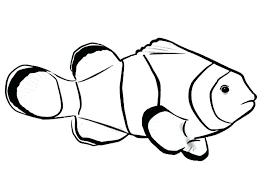 Free Printable Rainbow Fish Coloring Pages Colouring To Print