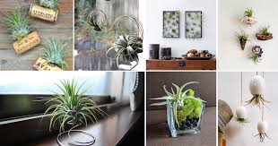 Adorable ceramic plant stand ideas for garden Landscape Lighting Balcony Garden Web 51 Most Amazing Air Plant Display Ideas Balcony Garden Web