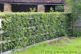 Classic Native Hedge For 1720m Hedgerow  £5499  Farm And Fruit Tree Hedgerow