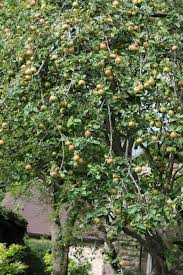 Hedgerow Possibilities Part 2  The Official Blog For The North Fruit Tree Hedgerow