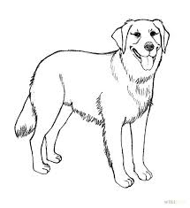 Small Picture Realistic Golden Retriever Coloring Pages How To Draw A Golden