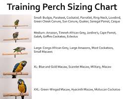 Amazon Com Parrot Training Perch Kit Standard Small