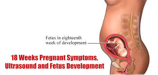 18 Weeks Pregnant Symptoms Ultrasound And Fetus Development