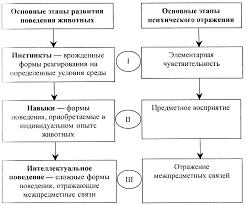 Основные этапы развития психики