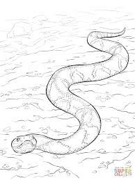 Small Picture Southern Copperhead Snake coloring page Free Printable Coloring