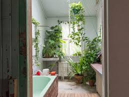 The Plants That Will Actually Thrive Not Die In Your Bathroom Plants In Bathroom