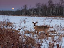 Deer Movement Chart Ms How Moon Phases Will Impact Deer Hunting During The Rut This