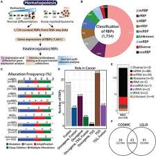 Frontiers Transcriptomic Analysis Identifies Rna Binding