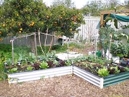 Small Picture Growing vegetables in small spaces Sustainable Communities South