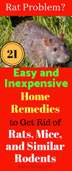 rodent repellent getting rid of mice