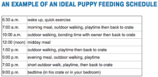 Puppy Feeding Schedule Chart Top 8 Best Puppy Feeding Guides What To Feed A Puppy How