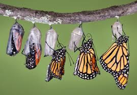 butterfly க்கான பட முடிவு