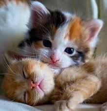 sweet cat love. Simple Cat Sweet Cats Welcome Their Owners  Adorable Video On Cat Love