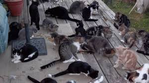 hundreds of cats. Plain Cats In Hundreds Of Cats F