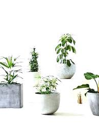 tall indoor plant pots indoor flower pots tall indoor flower pots tall indoor plant pots love