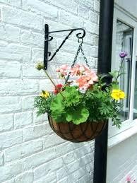 hanging plants outdoor hanging hanging plants outdoor nz