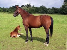 Une Jument Et Son Poulain 2 Cheval Animal Equus Fond Ecran Image