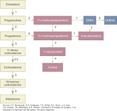 Thyroid Parathyroid And Adrenal Schwartzs Principles Of