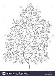 leaf leaves vines ornate decoration drawing photo picture image copy deduction