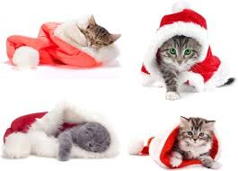 Image result for free stock photos cats