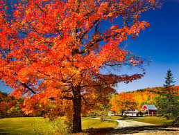 Fall Landscaping Attract Buyers With Colorful Fall Landscaping Ideas