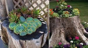 Resultado de imagem para create beautiful flower beds in tree trunks