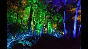 Enchanted Forest Of Lights Descanso Enchanted Forest Of Light Descanso Gardens