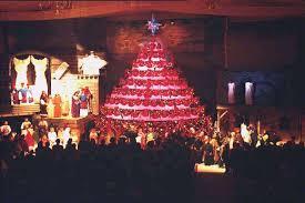 Living Christmas TreeThe Living Christmas Tree Knoxville Tn