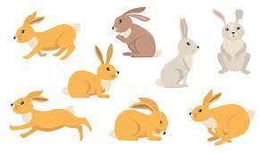 <b>Rabbit</b> Images | Free Vectors, Stock Photos & PSD