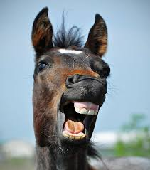 people with horse teeth. Beautiful Horse To People With Horse Teeth J