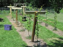 Photo 1 of 7 Building Trellis - Continued. ( Build Grape Trellis Pictures  #1)
