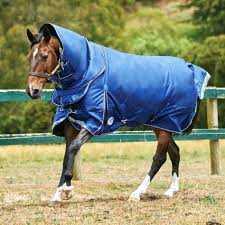 Horse Blanket Chart Tacomexboston Com