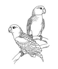 bfb57d767b2d1269d77e92c8e56d80bc 41 best images about coloring pages on pinterest coloring on creative coloring birds