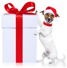 Doggie gift ideas