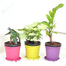 small plants for office. Small Desk Plants Office That Fit On Your Business Trends Indoor For