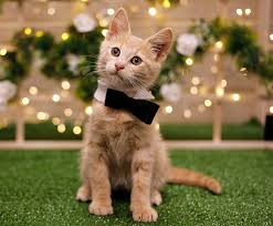 cats and kittens pictures.  Kittens On Cats And Kittens Pictures H