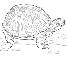 Small Picture Realistic giant land Turtle difficult coloring pages for grown ups