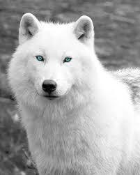 Celine(Werewolf) | Wiki | Werewolves Amino