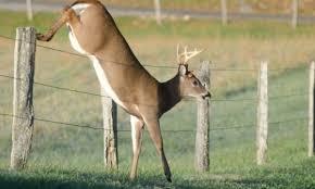 11 ways to keep deer away from hostas