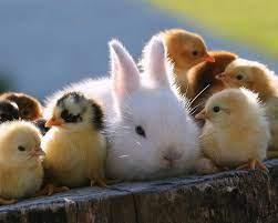 1280x1024 Super Cute Animals 1280x1024 ...