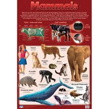 Mammals Wall Chart Rapid Online
