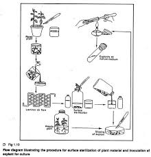 Tissue Culture Flow Chart Techniques Used In Plant Tissue Culture With Diagram